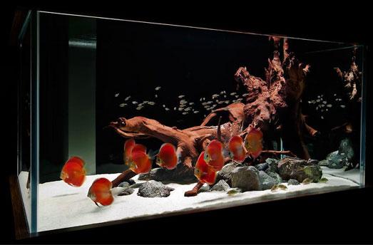 Пресноводный аквариум своими руками